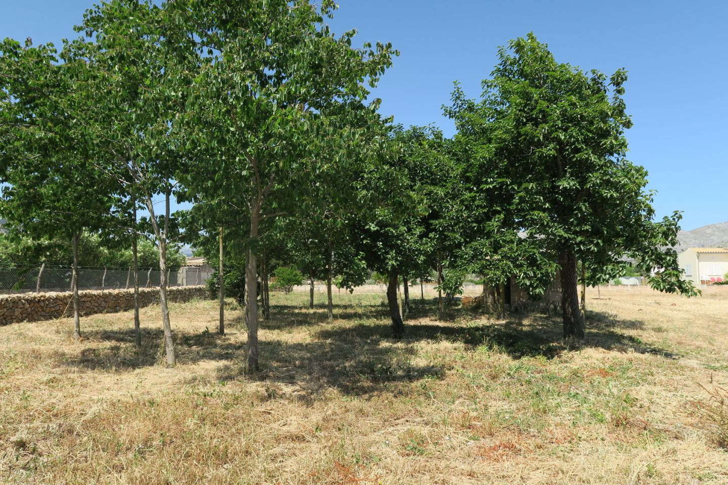 Countryside Land for sale in PUERTO POLLENSA 2