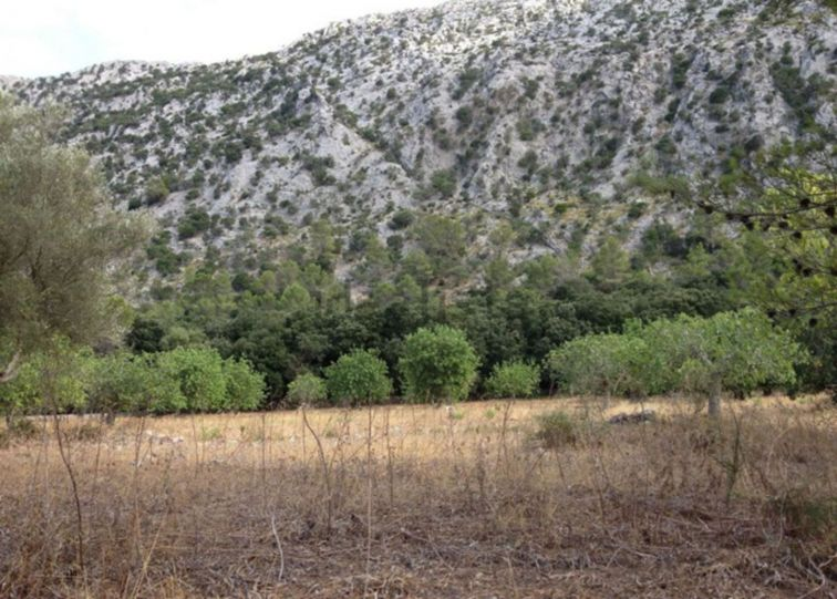 Countryside Land For Sale in POLLENSA
